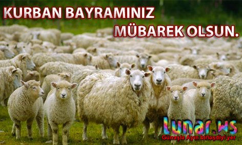 Qurban Bayrami Təbrikləri Sekilli Lunar Az